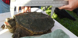 KERA News Story Features Paschal HS Trinity River Turtle Survey Project
