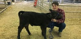 Arlington Heights HS Student Delivers Calf at Fort Worth Stock Show and Rodeo