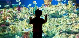 Enjoy Sea Creatures While Getting Back into the School of Thought