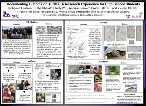 Turtle Survey Poster