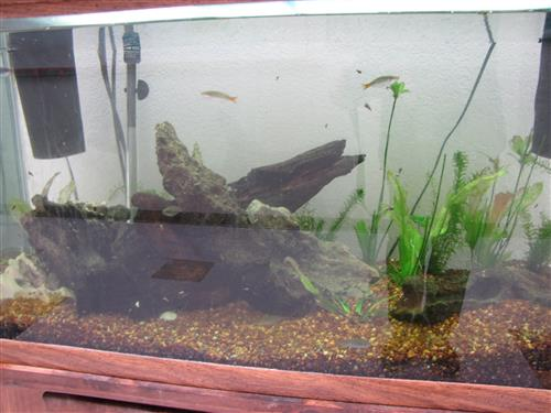 tank with fish 1