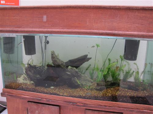 tank with fish 2